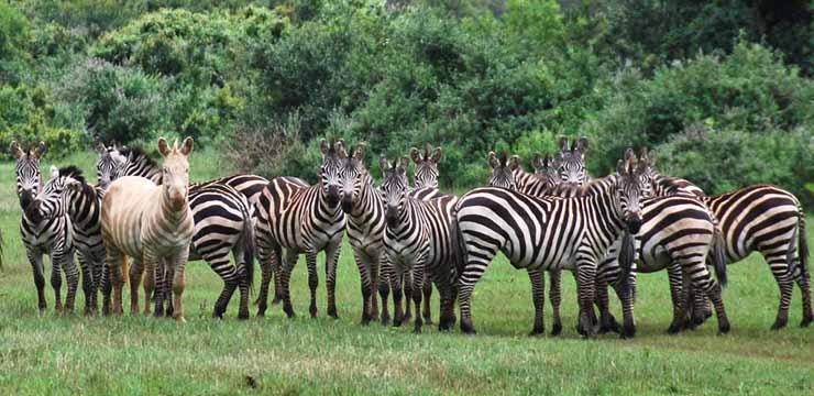 Kenia, esencia del África mítica