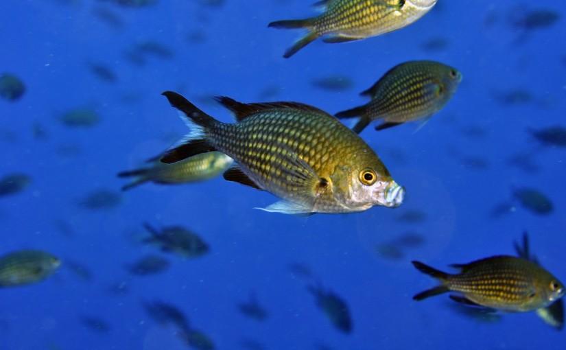Benidorm: Buceo y submarinismo