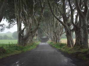 Dark Hedges - Tronos Trip