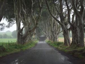 Dark Hedges - Tronos Trip