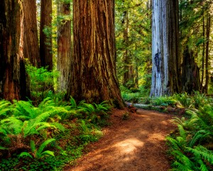 California_s Redwood Coast