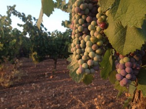 Ruta del vino de Villena