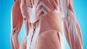 musculos-coluna-lombar-0417-1400x800