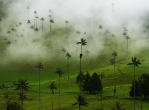 20 Valle-del-Cocora-in-the-Coffee-Region-Colombia-