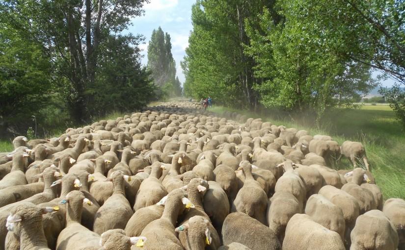 Convertirse en pastor, la más auténtica de las experiencias