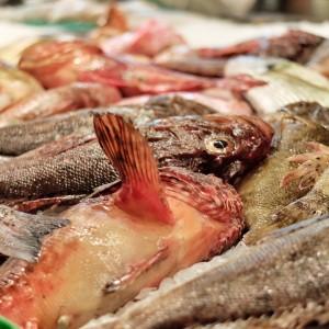 Rafel Balaguer Prunés_pescado fresco