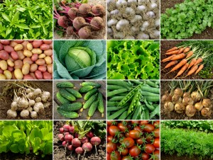 organic-foods-grid