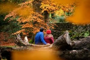 Kilbroney Forest Park (1)