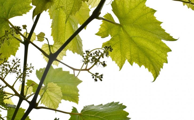 Bodega Otazu, un otoño de vendimia