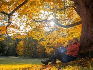 Autumn_416x320