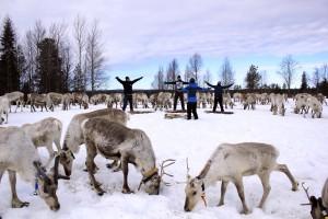 Foto 3 Reindeer_yoga_ruka-kuusamo_porojooga_kujalanporotila4