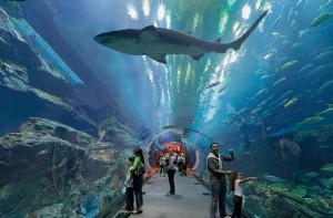 Foto 4 Dubai Aquarium