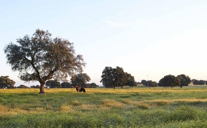 Dehesa El Milagro: producción ecológica, sostenibilidad y alta calidad